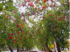 その時期それぞれのりんごが皆様をお出迎え♪