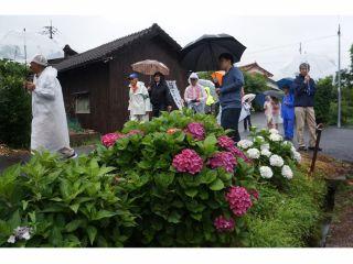 戸石川集落の「アジサイロード」