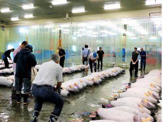 マグロの水揚げ量日本一の静岡県で学ぶマグロの食育体験プログラム