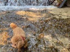 冷た~い♪川遊び