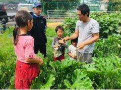 夏野菜収穫体験の様子です。