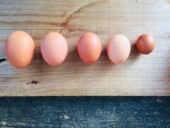 平飼い養鶏を行ってます。お米や野菜をたっぷり食べた鶏たちの卵は私たちを元気にしてくれます。そして、鶏たちの糞は、堆肥となり畑の栄養となります。