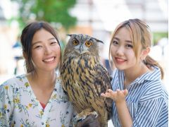 フクロウ等の可愛い鳥たちを腕に乗せて記念撮影♪撮影後には鳥にさわることもできます!