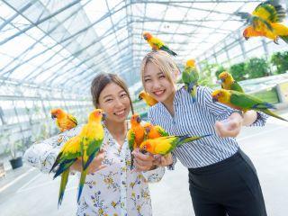 掛川花鳥園では広い園内を鳥たちが自由に飛び交います。人懐こい鳥たちにごはんをあげたり、触れ合いを楽しみましょう。