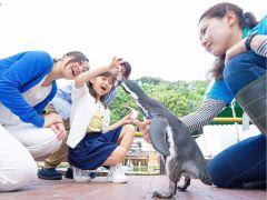 ペンギンに、ごはんのお魚を直接あげる事が出来る、当園の人気イベントです!可愛いペンギンが、間近でごはんを食べる姿を見る事が出来ます♪