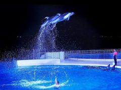 ★夏限定で『夜の水族館』も開催★