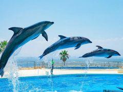 博多湾を背景とした見晴らしのいいショープール♪開放的で気持ちもリフレッシュ♪