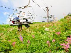 ゴンドラリフトを降りた後、リフトを更に2本乗り継いで上へ上へ。足元には美しい花々。