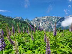 美しい高山植物と山々に癒されます。