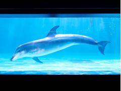 スタジアムでは見ることのできない水中でのイルカの泳ぐ様子や姿を是非、ご覧ください。