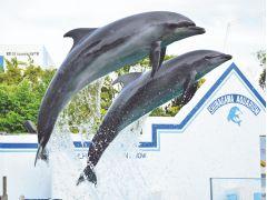 空を飛び、水を駆けるイルカショーは、まさにエンターテイメント。 しながわ水族館のスターたちの華麗な演技をとくとご覧ください。