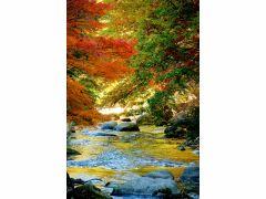 昇仙峡の紅葉(イメージ)