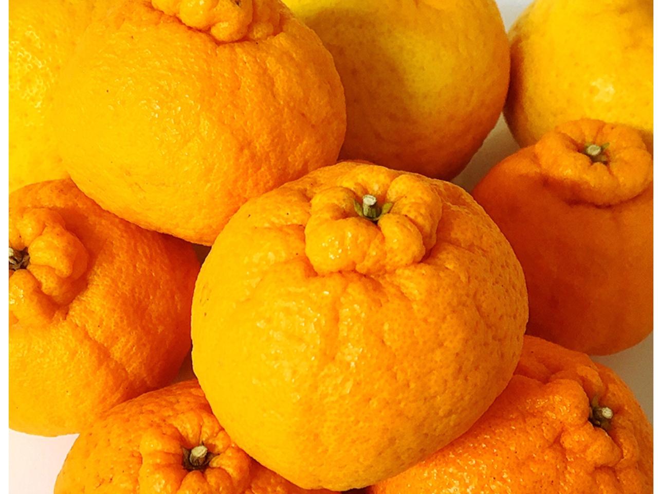 \*オリジナルの柑橘系ポン酢作り*/1月~2月限定♪好みの柑橘系から選んでオリジ...